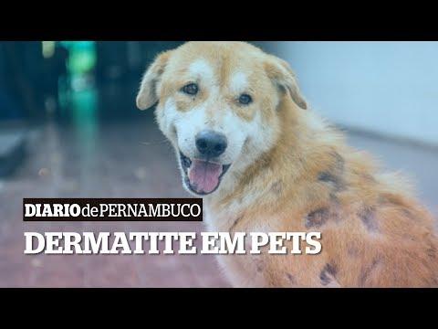 Saiba como tratar dermatite do seu pet
