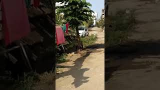 pitbull dog crying when he meets owner after long time (poman yogesh and shyam shinde)
