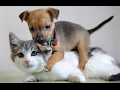 Funny Cats Meeting Cute Puppies For The First Time Compilation 2017 [BEST OF]