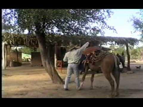 Dalmiro Cuellar - El criollo