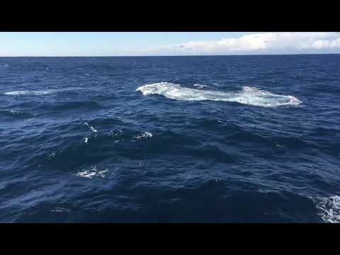 video Oz Whale Watching Weekend Breakfast Cruise