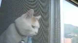 かご猫18