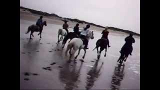 Au grand galop sur la plage