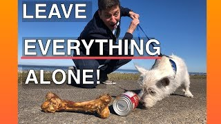 How To Train Your Dog To Leave EVERYTHING Alone -- EVERYWHERE!