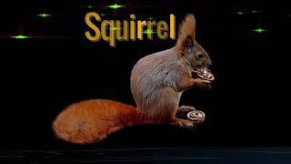 The Squirrel Spirit Animal | Meaning - Spirit animals