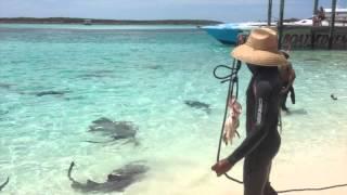 バハマでサメに餌付けする