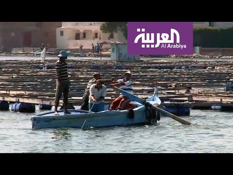 صيادون يموتون من أجل الأسماك في مصر!