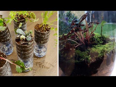 Совети за одгледување растенија со кои ќе си направите мала градина во домот
