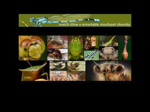 [Webcast] - Musculoskeletal modeling of Dragonflies
