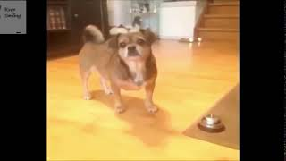 Funny Little Fellas Doing Funny Things 4