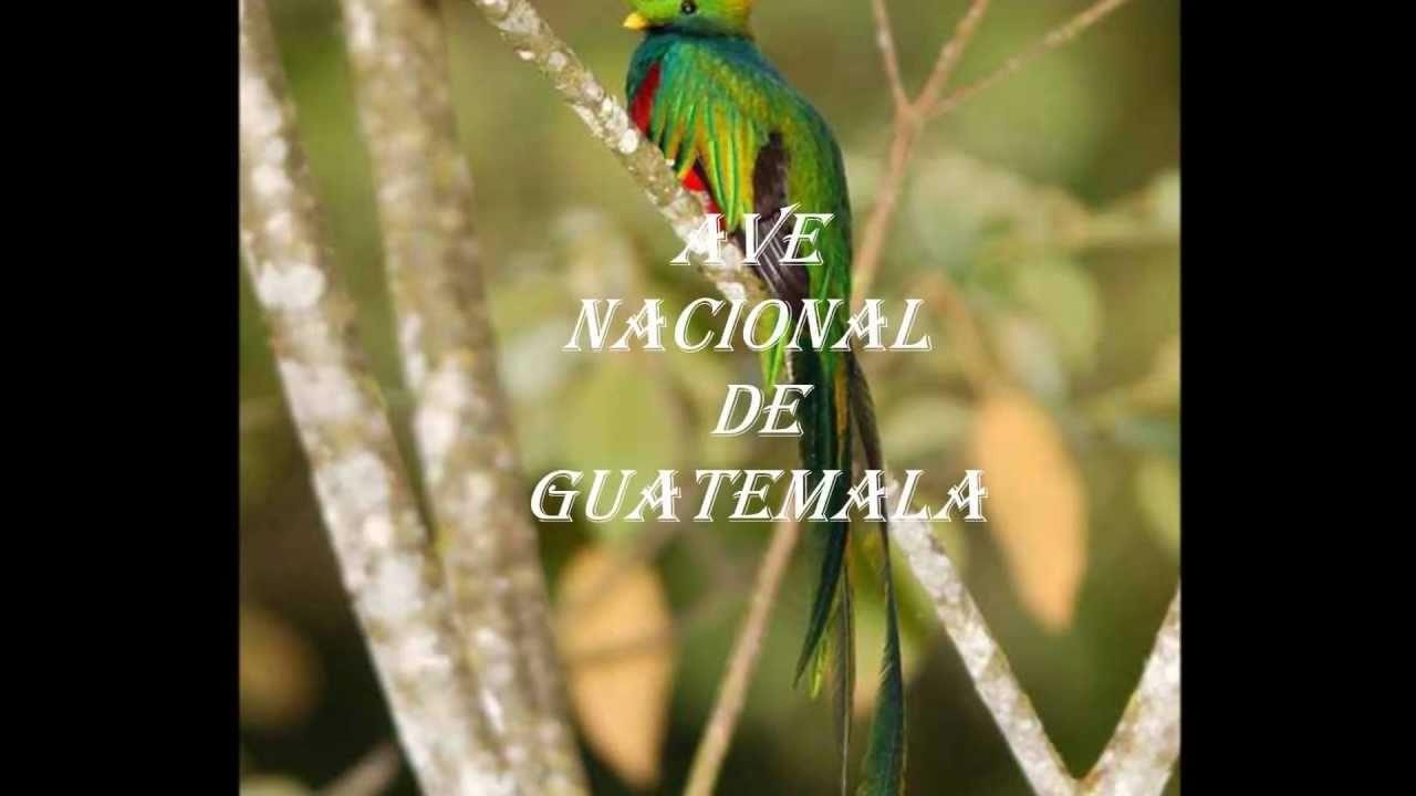 Quetzal Mayan Symbol maxresdefault j