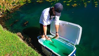 """Transporting Fish For Big Bass Survival!! (Pond Rescue) """"Jiggin With Jordan"""""""
