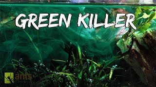 My Pets Were Killed by a Green Monster