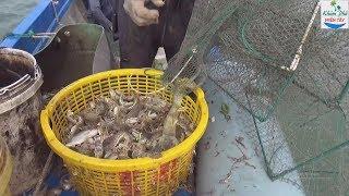 Thăm lú biển trúng đàn tôm tích quá đã P1 | Shrimp