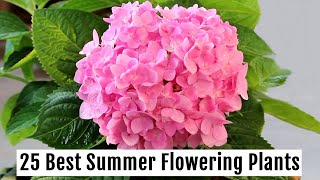 Grow These 25 BEST Summer Flowering Plants This Season - PART 1