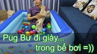 🛀Đập hộp bể bơi phao cho chó Pug - Chó Pug đi giày mắc hài 😅 Pugk vlog - Bư mặt 6