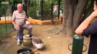 animal odd couples Full documentary 2013