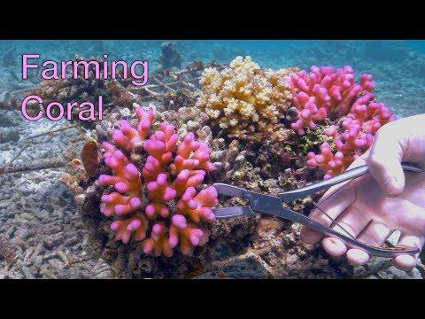 Coral Farming Workshop in the Solomon Islands