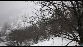 Auli Snowfall 2019