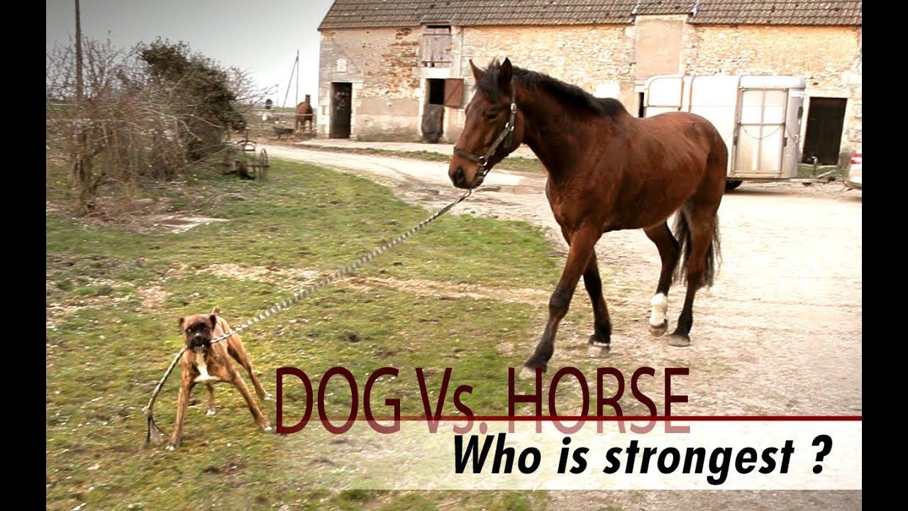 Funny Horse Videos - Cute Horses - YouTube |Youtube Pets Funny Horses