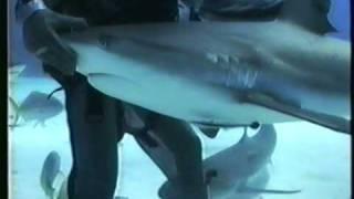 Sin miedo de los tiburones