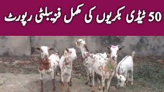 Big Nagri Sahiwal Goats - Sadeeq Bhai Ki Bakriyan 2019