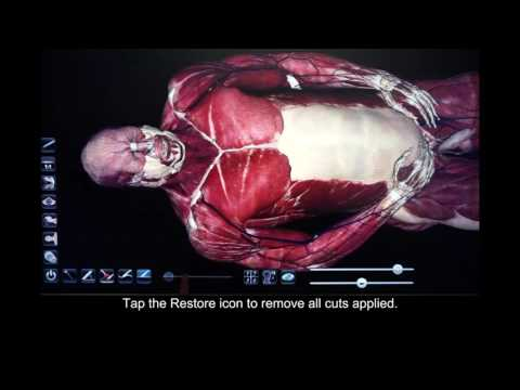 How to Use the Cutting Tool in Anatomage Table 5.0