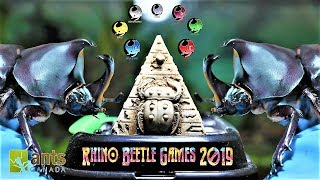 The Rhino Beetle Games | Epic Beetle Olympics
