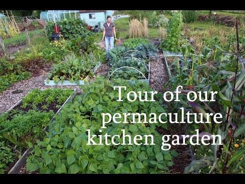 Grow your own food: Permaculture Kitchen Garden