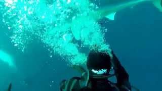 ヨシキリザメに咬まれる