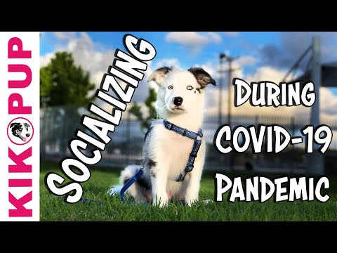 Socializing a Puppy During the Pandemic