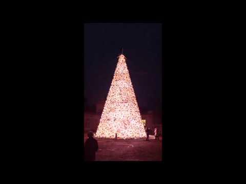Christmas Tree Light Show at Longleat Safari Park