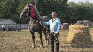 Cei mai puternici cai din Romania 2017