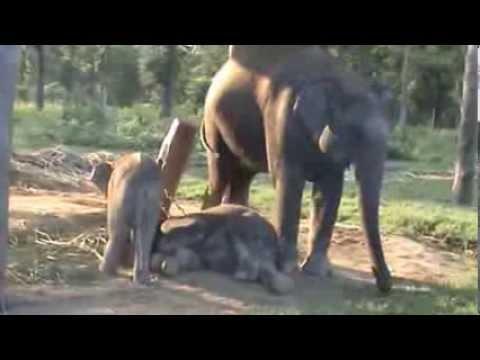 Welt-Sicht Projekt: 341017 - Chitwan Nationalpark