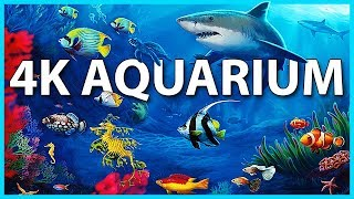 The Best 4K Aquarium for Relaxation