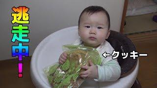 ベビーゲートvsクッキーを奪う赤ちゃん