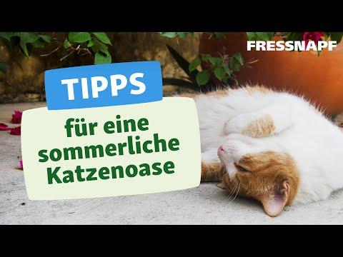 Die perfekte Oase für eure Katze - Balkon und Terrasse katzengerecht gestalten