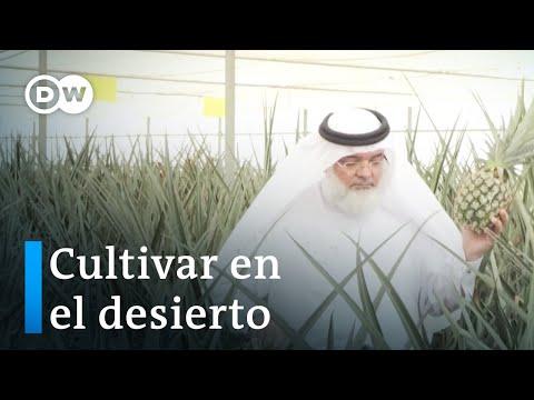 Tecnología para la agricultura en Emiratos Árabes Unidos