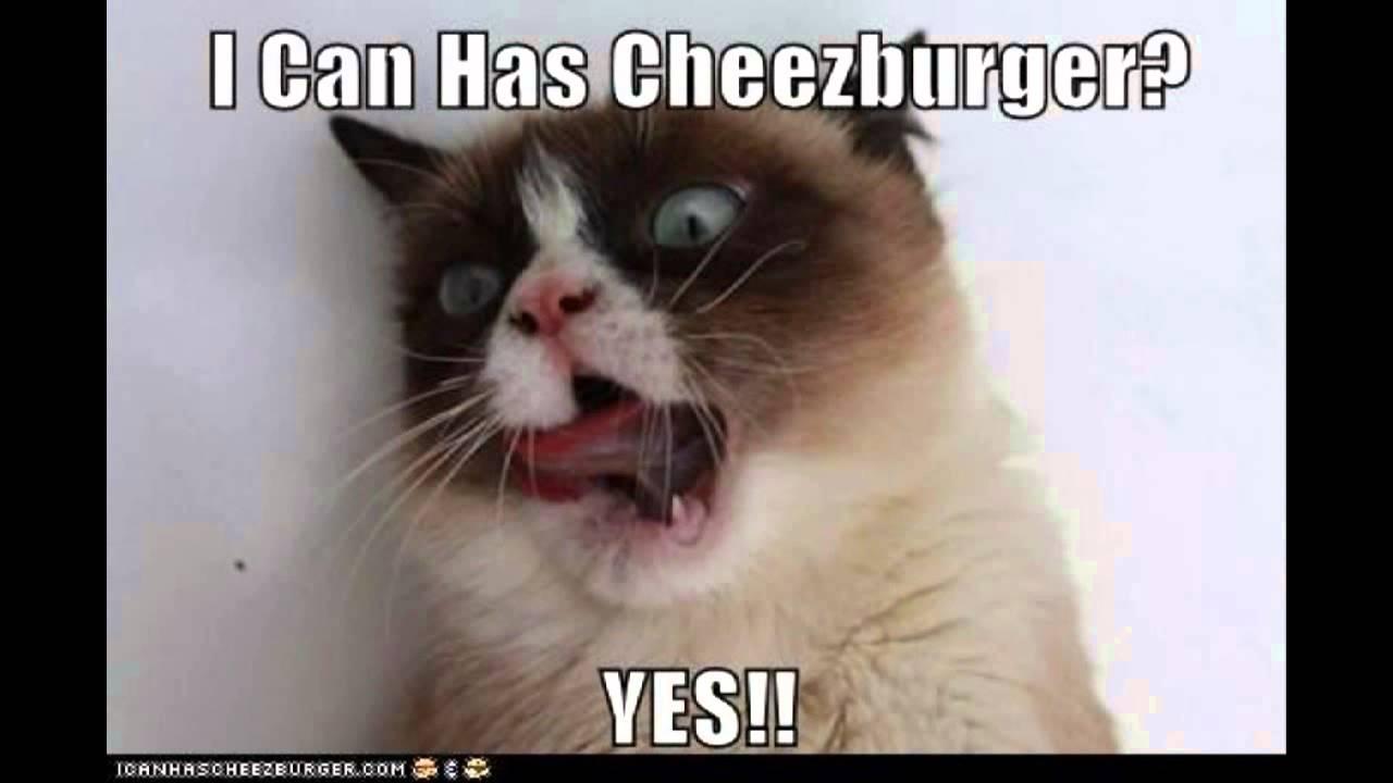 grumpy cat memes youtube