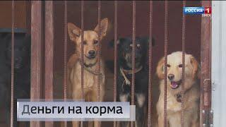 «Вести Омск», утренний эфир от 14 октября 2021 года