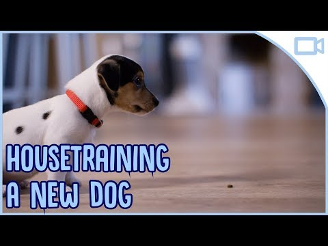 How to House Train a New Dog!