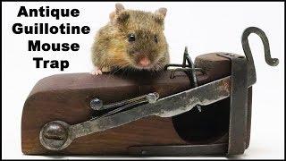 Antique Guillotine Mouse Trap  -  $1,000 Mousetrap   -   Mousetrap Monday