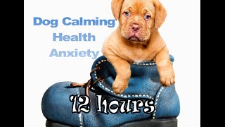 Dog Calming 12 hours of relaxing Music for your Dog (Tested)