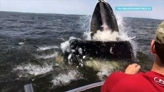 Возвращение китов НЬЮ-ЙОРК,