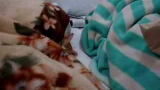 布団で寝るねこ