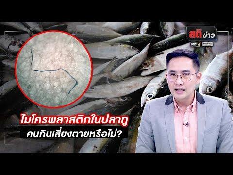 ไมโครพลาสติกในปลาทู คนกินเสี่ยงตายหรือไม่? | สติข่าว | ข่าวช่องวัน | one31