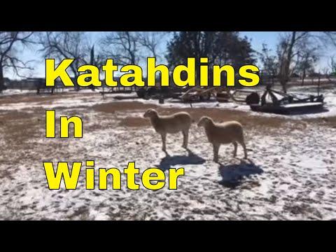 Farm Talk- Sheep Update and Breaking Ice