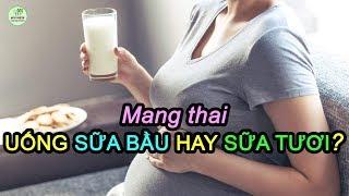 BÀ BẦU NÊN UỐNG SỮA BẦU HAY SỮA TƯƠI?- Mang thai nên uống sữa gì tốt cho cả mẹ và bé?