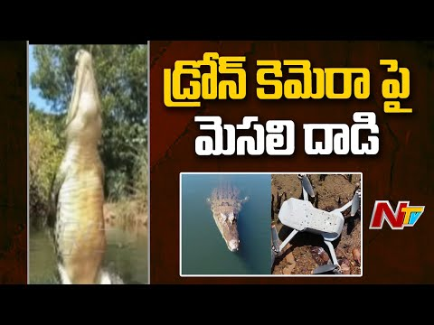 Crocodile attack on drone camera while shooting in Crocodiles park, video goes viral