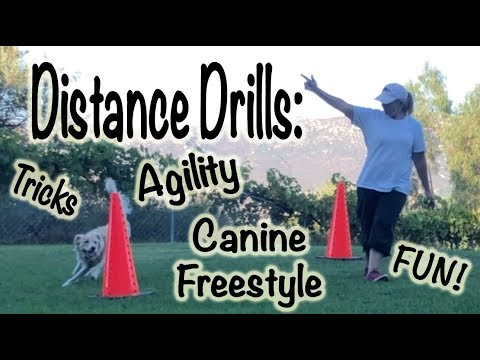 Distance Drills: Dog Agility Training